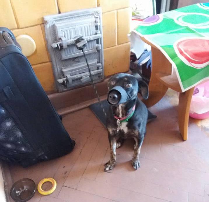 """Zaniedbany pies w Sosnowcu – fot. Stowarzyszenie Opieki nad Zwierzętami """"Nadzieja na dom"""""""
