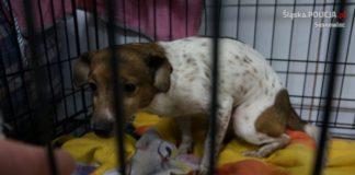 Zaniedbane zwierzęta w Sosnowcu – fot. Policja Sosnowiec