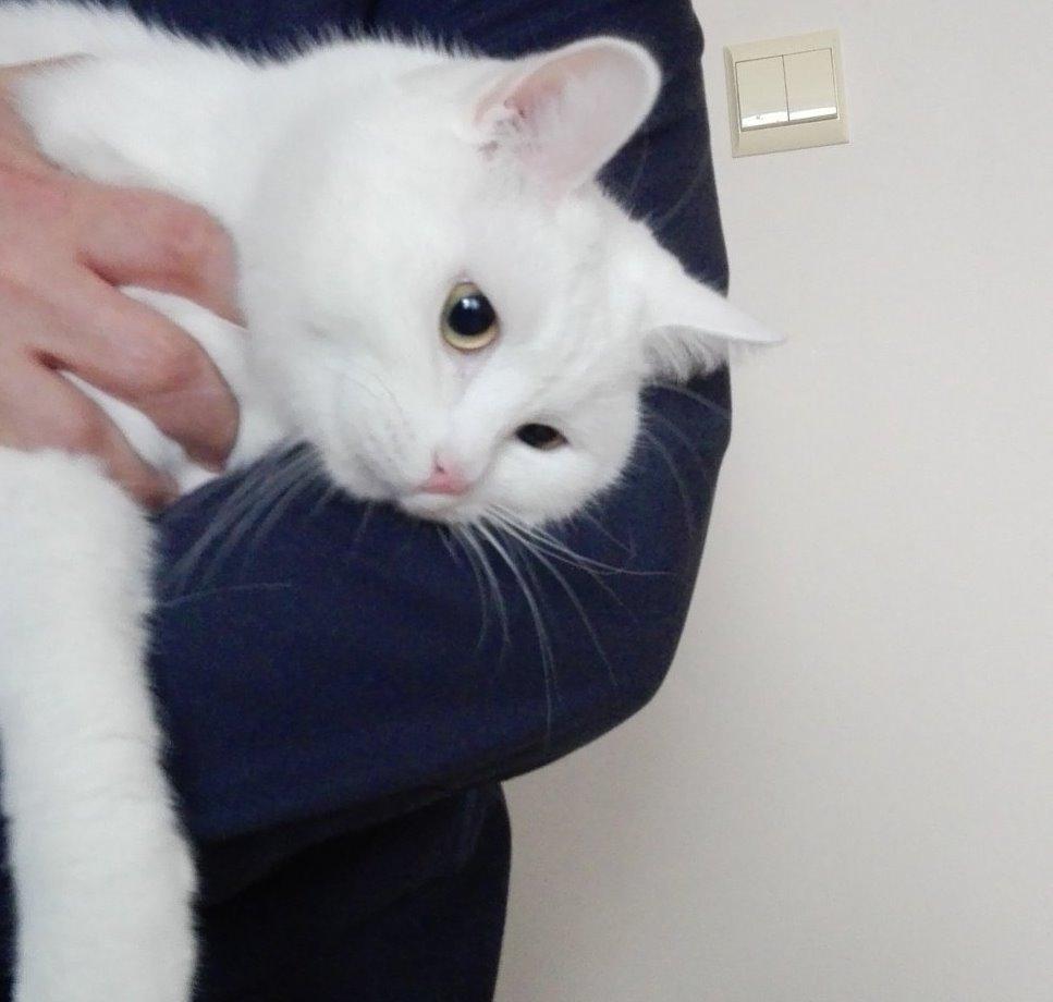 Uratował kota - fot. KPP w Będzinie