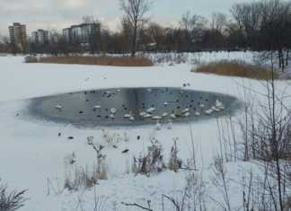 Stawiki zimą - fot. MG