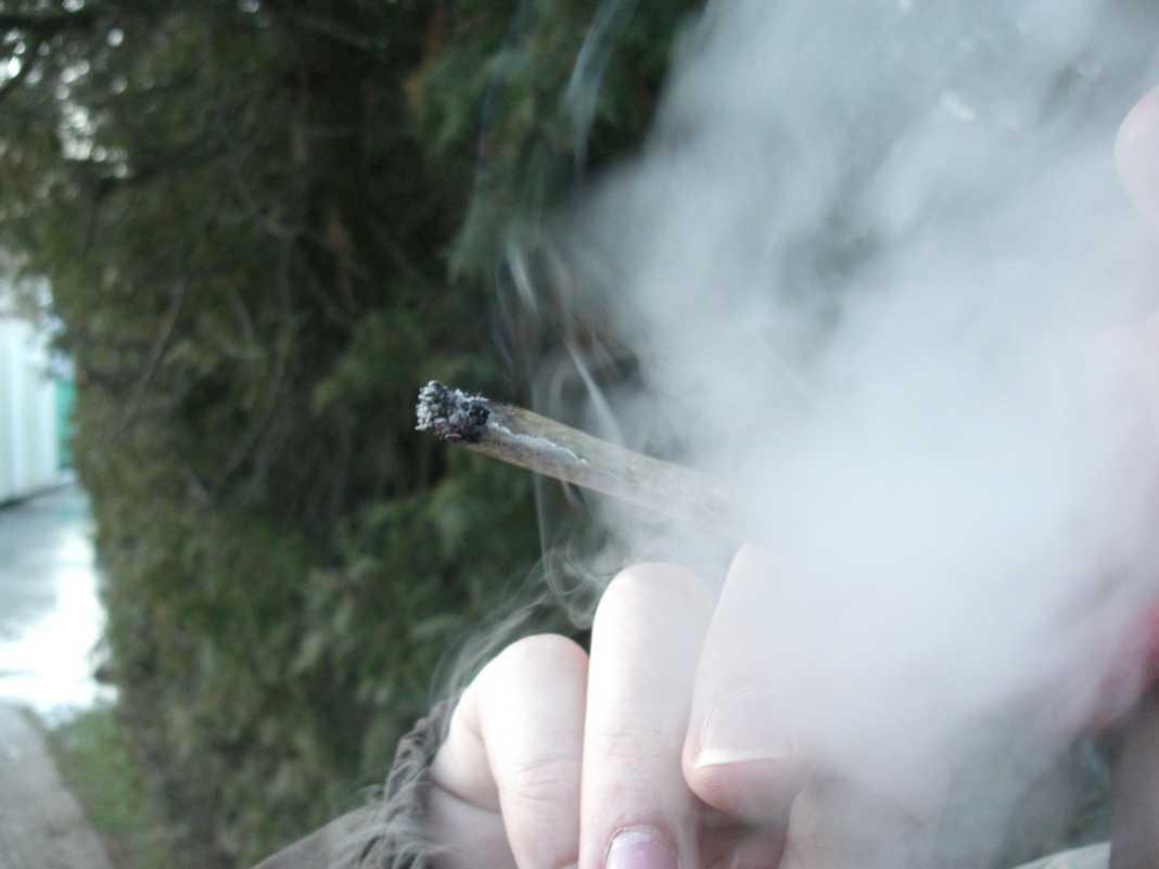 Marihuana - fot. Wikimedia