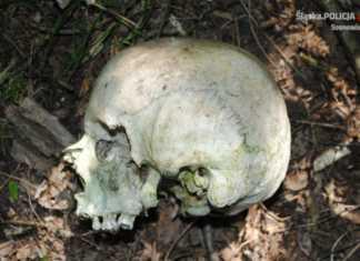 Policjanci wyjaśnili zagadkę czaszki - fot. KMP Sosnowiec