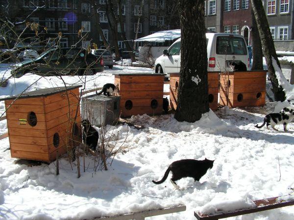 Domki dla kotów - fot. Printerest