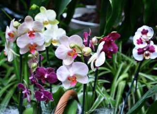 Dni Orchidei - fot. arch. TZ