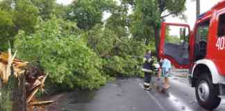 Powalone drzewo w Czeladzi - fot. Miasto Czeladź/Facebook