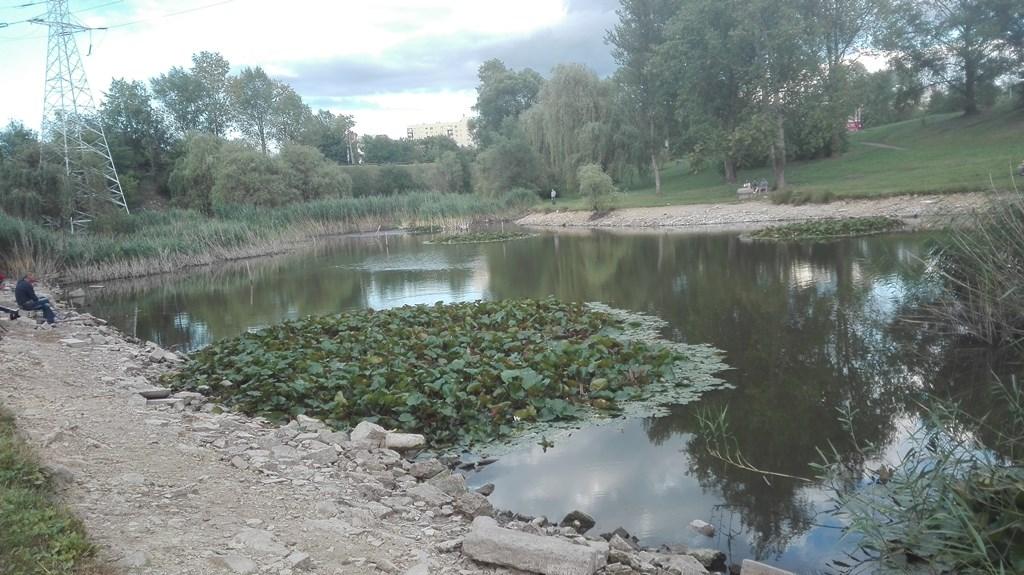 Wysychające jeziorko przy Górce Środulskiej w Sosnowcu - fot. EG