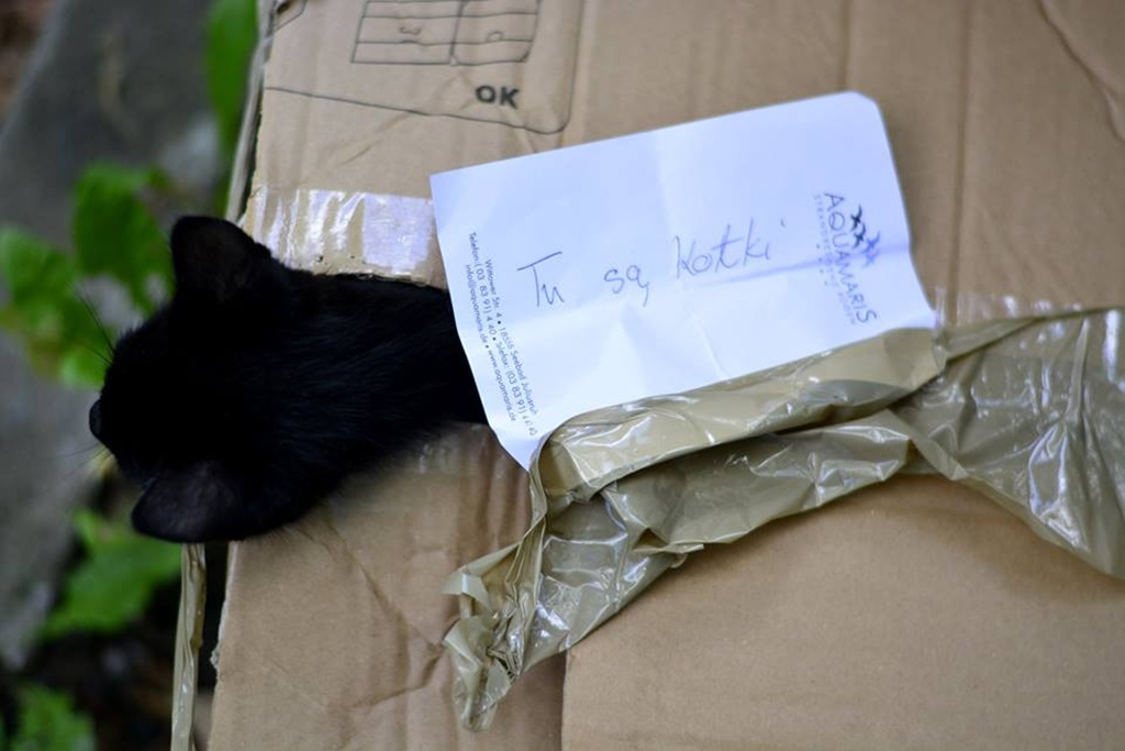 Koty zamknięte w kartonie - fot. Schronisko dla bezdomnych zwierząt w Sosnowcu