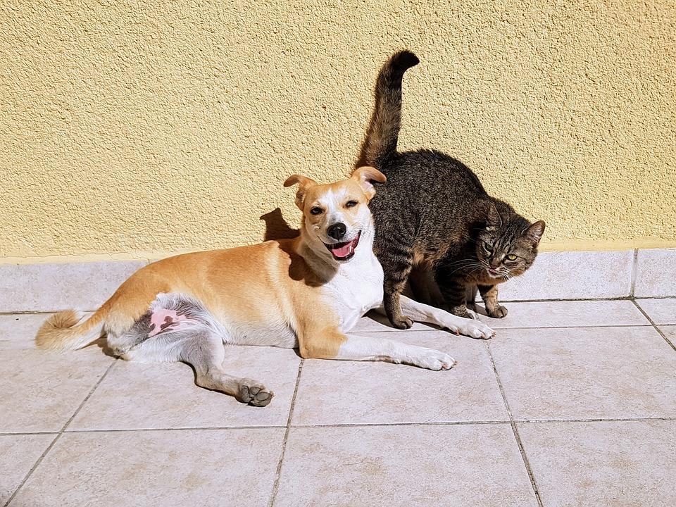 Zwierzęta - fot. Pixabay