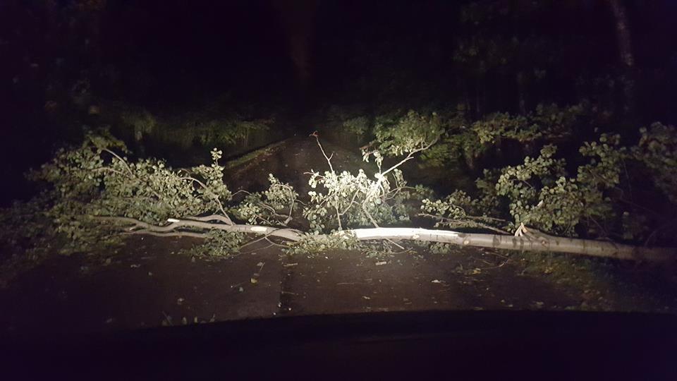 Powalone drzewo - fot. Michał Gajos/Facebook @Gdzie stoją w Sosnowcu