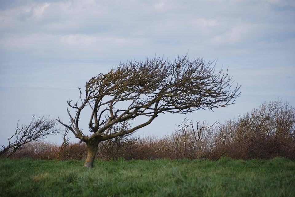 Drzewo, wiatr - fot. Pixabay