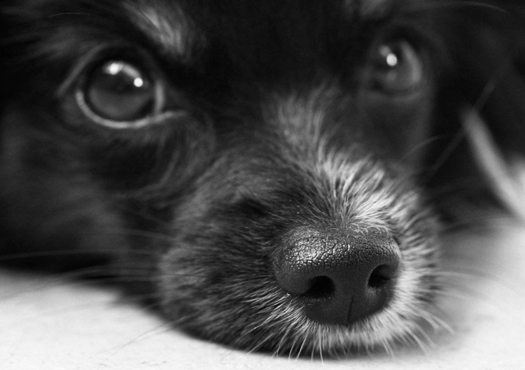 Pies - fot. Pixabay