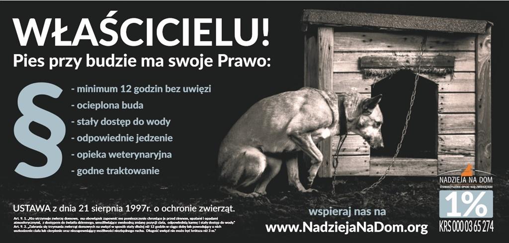 Pies przy budzie ma swoje prawo - fot. mat. pras.