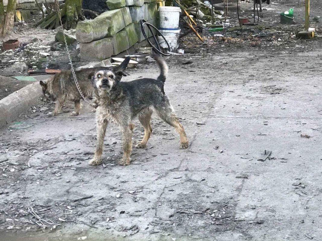 Psy na jednej z posesji w Trzebiesławicach - fot. OTOZ Animals Gliwice