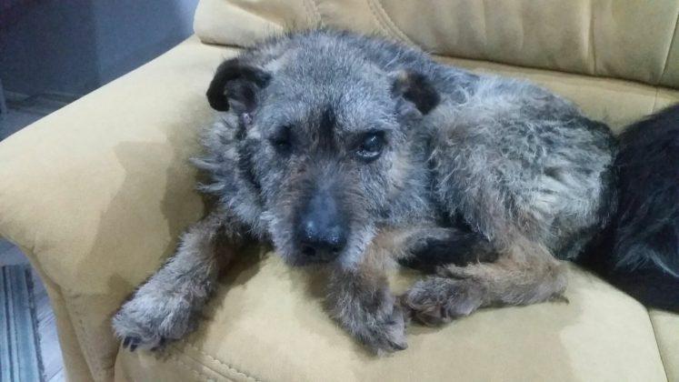 Jeden z 13 odebranych psów w Trzebiesławicach - fot. OTOZ Animals z Gliwic
