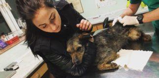 Psy zabrane z Trzebiesławic - fot. OTOZ Animals Gliwice