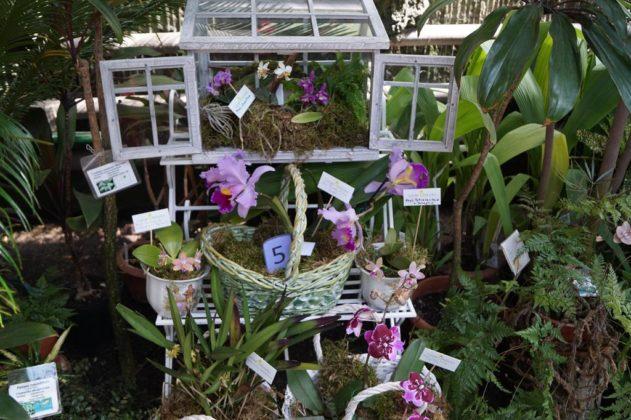 Dni Orchidei 2018 - fot. MC