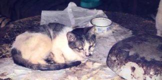 Dramat kotów w Sosnowcu - fot. Schronisko dla bezdomnych zwierząt w Sosnowcu