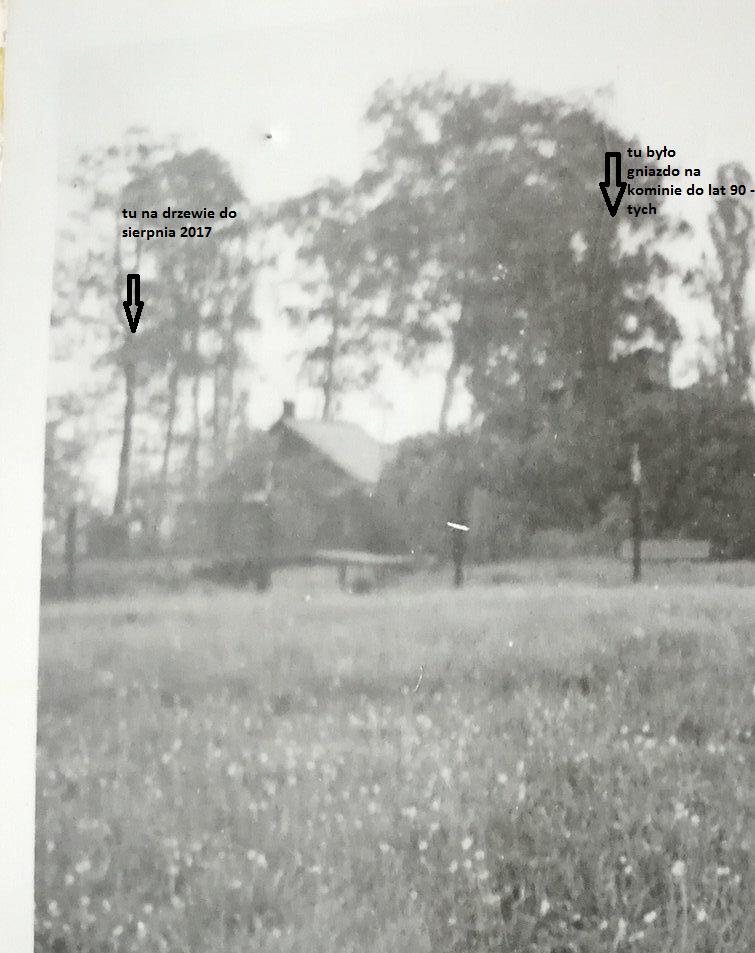 Bociany w Strzemieszycach - fot. archiwum prywatne