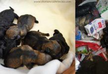 Szczeniaki wyrzucone na śmietnik - fot. Schronisko dla bezdomnych zwierząt w Chorzowie