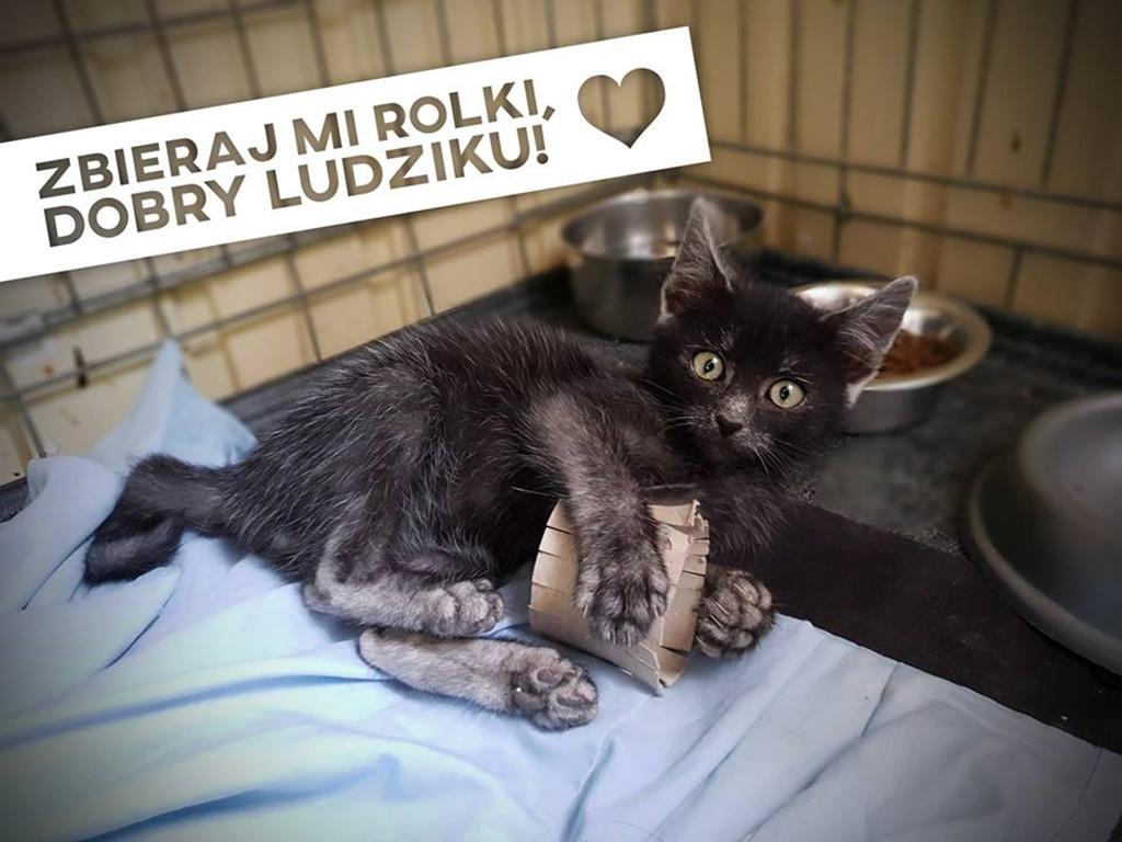 Rolki dla schroniska - fot. KOToteka/Facebook