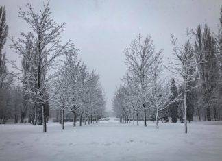 Park Fusińskiego w Sosnowcu - fot. UM Sosnowiec
