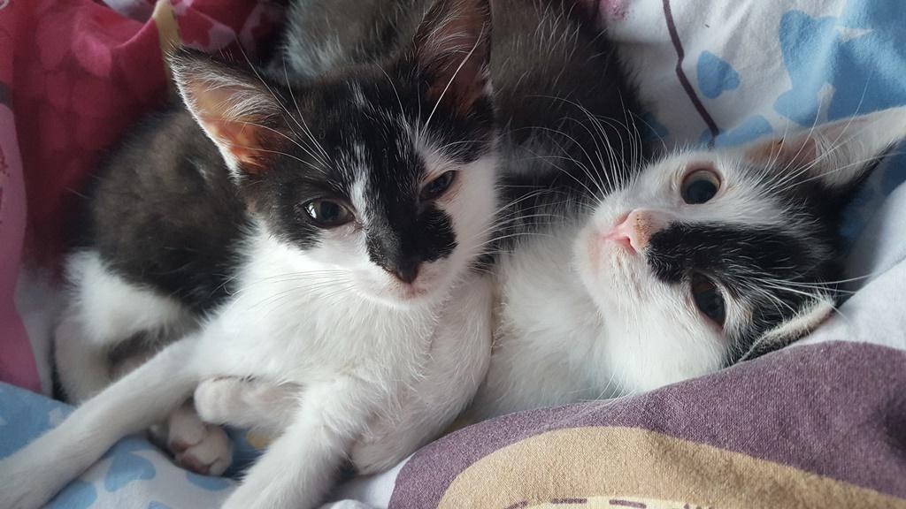 Niewiarygodnie Całe Zagłębie szuka zaginionej kotki Migotki | Twoje Zagłębie RX19
