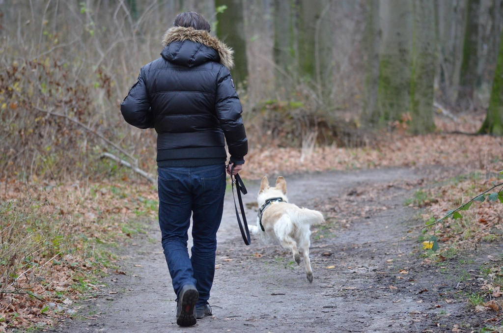 Spacer z psem - fot. Pixabay