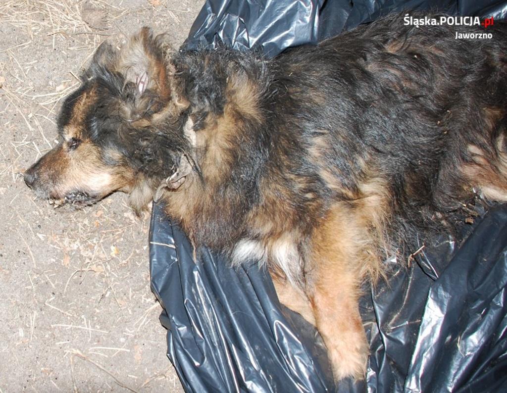 Zakopali psa żywcem - fot. KMP w Jaworznie