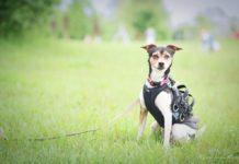 Sosnowiecki ZUS zaadoptował psa – fot. Katarzyna Fulas