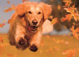 W Czeladzi powstał kolejny wybieg dla psów – fot. UM Czeladź