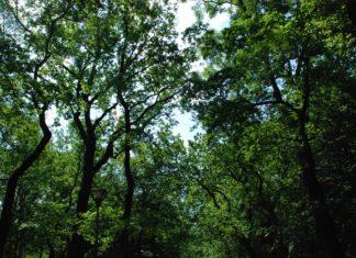 Drzewa w Dąbrowie Górniczej - fot. UM Dąbrowa Górnicza