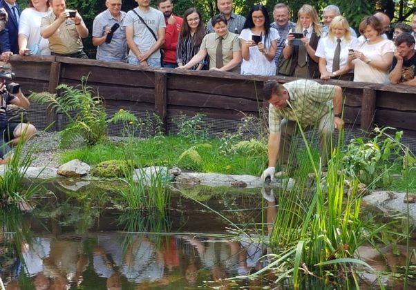 Żółwie błotne w Siewierzu - fot. Urząd Miasta i Gminy Siewierz