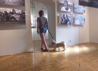 Na wystawę z psem - fot. Zamek Sielecki