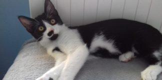 Adopcyjny Kocik Audrey - fot. archiwum prywatne