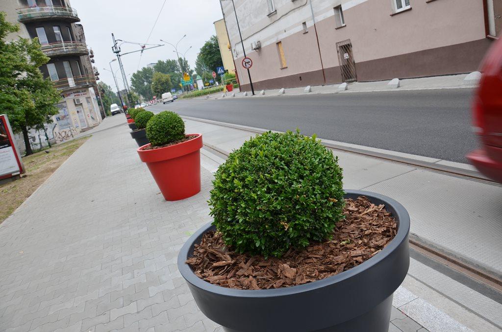 Bukszpany Sosnowiec - fot. Arch. TZ