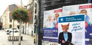 Kocia kampania wyborcza - fot. KOToteka
