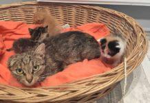 Adopcyjny Kocik Frida – fot. archiwum prywatne