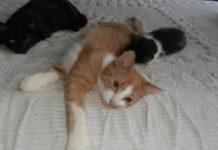 Adopcyjny Kocik Miodek – fot. archiwum prywatne