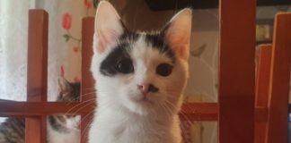 Adopcyjny Kocik Poziomka – fot. archiwum prywatne