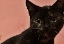 Adopcyjny Kocik Luna – fot. archiwum prywatne