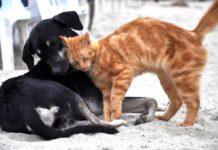 Kot i pies - fot. Pixabay
