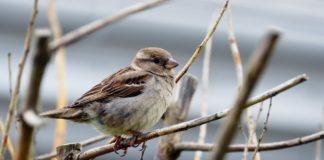 Ptak – fot. Pixabay