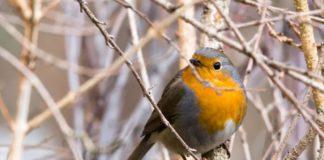 Zimowe Ptakoliczenie w Sosnowcu - fot. Barbara Netczuk