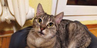 Adopcyjny Kocik Lulu – fot. archiwum prywatne