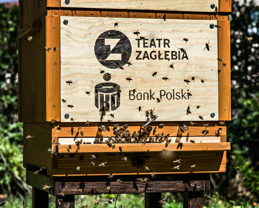 Pszczoły w Teatrze Zagłębia - fot. Maciej Stobierski